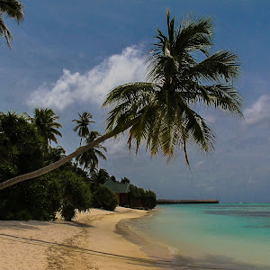 Maldives 210810 092-Edit-RICK-MCEVOY-01-210810.jpg