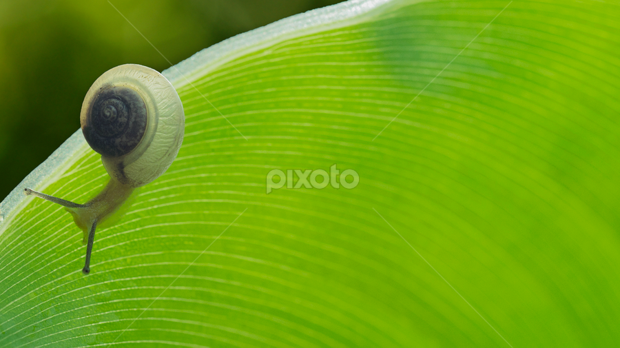 snail by Widhi Wijaya - Nature Up Close Other Natural Objects ( nature, green, color, food, concept )