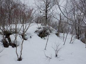臼本山山頂付近(林道を進む)