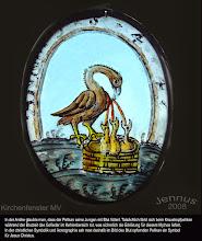 Photo: Der Krauskopfpelikan (Pelecanus crispus) gehört zur Familie der Pelikane (Pelecanidae). Er ist ein Brutvogel in Südosteuropa sowie in Mittelasien bis in die Mongolei. Während des nacheiszeitlichen Temperaturoptimums vor etwa 8000 Jahren lebten Krauskopfpelikane für einige Jahrhunderte auch in Südskandinavien.