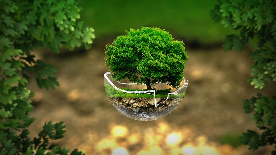 5 Reasons Why All Businesses Should Go Green