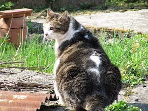 Photo: Day 15 - A Fat Cat (no, she isn't pregnant)