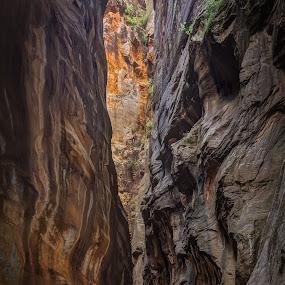 Getting Narrow by Ruben Parra - Landscapes Caves & Formations ( slot canyon, narrow, the narrows, stream, zion national park, utah, virgin river, falls, sandstone, landscape, rocks, wall,  )