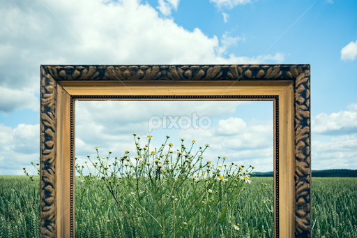 picture frames in nature iii by denny gruner landscapes prairies meadows fields - Nature Photo Frames