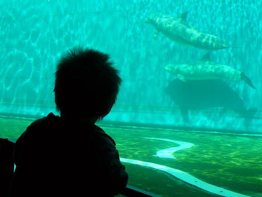 et captivam duxerant de aquarium di Sara D'Amato