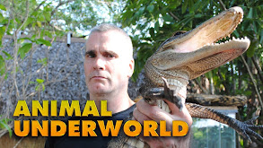 Animal Underworld thumbnail