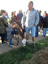 Photo: les ânes de Herbert à Ohrenthal