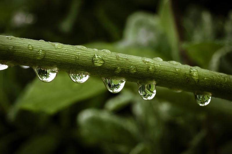 .. Drops ... di enricosottocorna