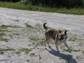 Photo: Местный собак