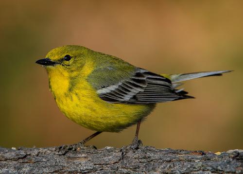 by Mike Craig - Animals Birds