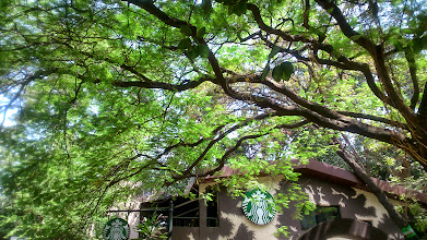 Photo: Gulmohar trees give shade from the intense October heat we are experiencing this year. 14th October updated (日本語はこちら) -http://jp.asksiddhi.in/daily_detail.php?id=669