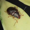 Monkey leaf beetle