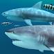 Sharks 3D - Live Wallpaper