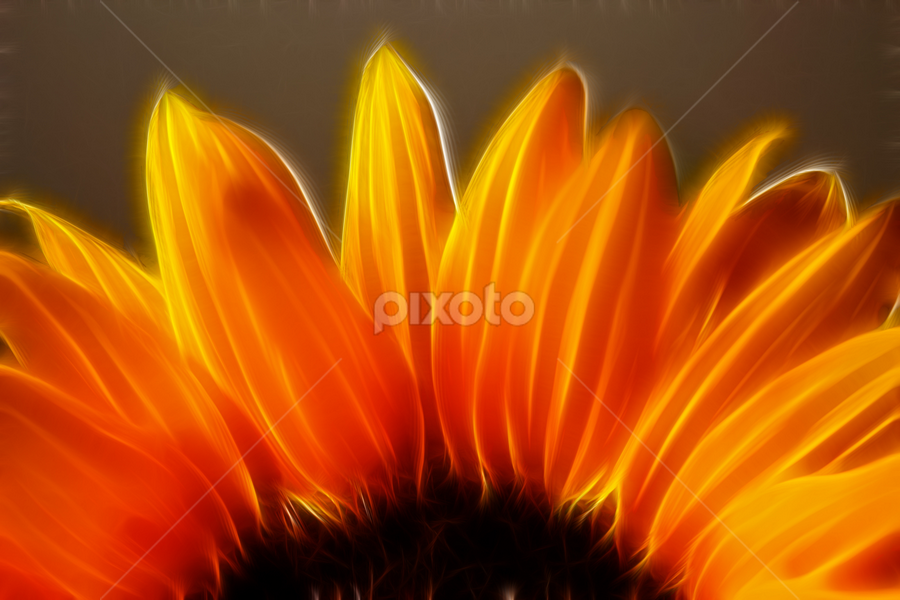 by Dipali S - Digital Art Things ( nature, flora, sunflower, flower )