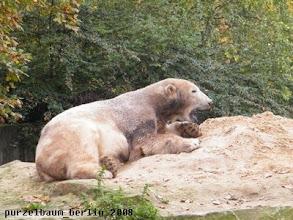 Photo: Ein idealer Platz fuer ein Nickerchen, findet Knut ;-)