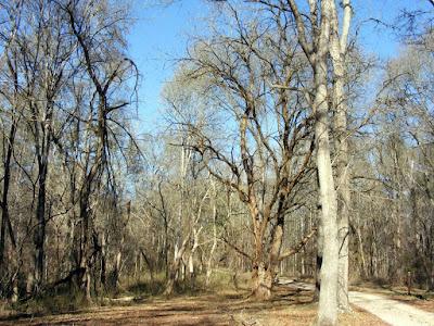 Eerie Skull Shoals Tree