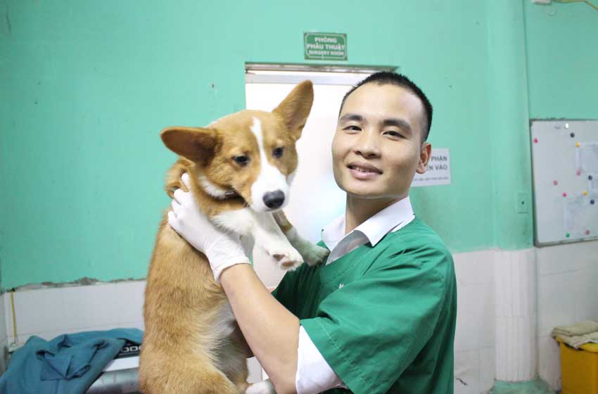 Săn tìm bác sỹ thú y hà Nội giỏi cho thú cưng có thực sự khó? - Ảnh 1