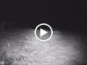 Video: Squibnocket Pond