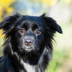Mimi' by Nando Scalise - Animals - Dogs Portraits