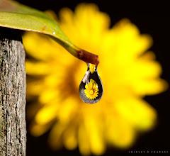 Photo: flower faucet