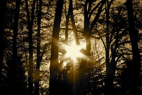 Stella solare di AdrianaF