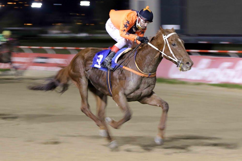Desert Conquer (Arabian Spirit) conquistó Handicap (1100m-Arena-VSC).