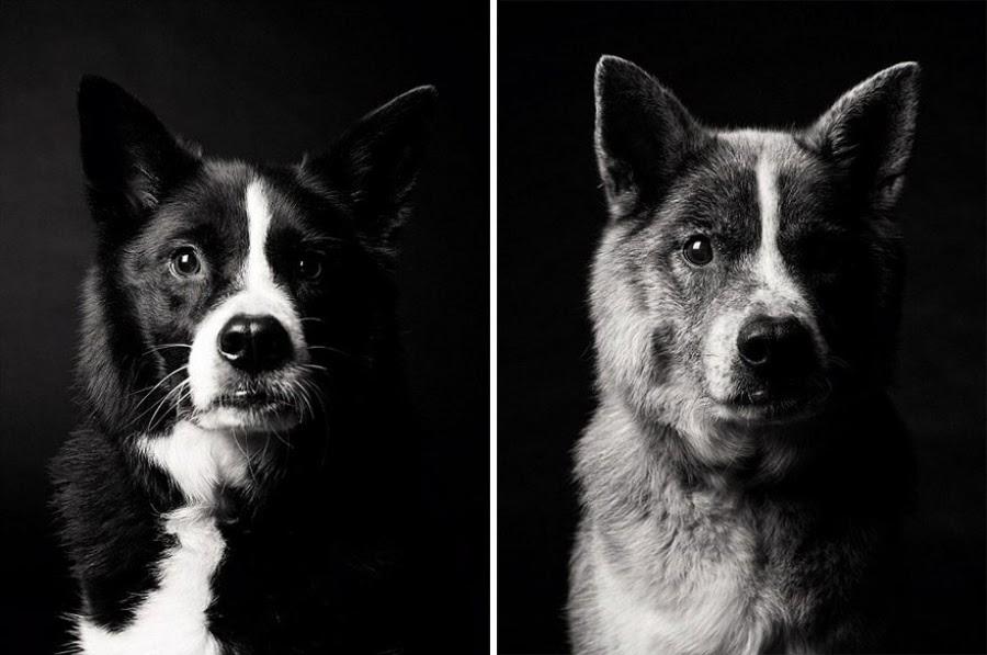 usiaatJTM998HF WWkAELq2SCxNRwbbSR01kMn0tE44=w900 h597 no - Как стареют собаки? Любопытный и трогательный фотопроект.
