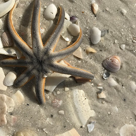 Starfish by Mary Danihel - Nature Up Close Other Natural Objects (  )