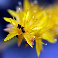 La formica di
