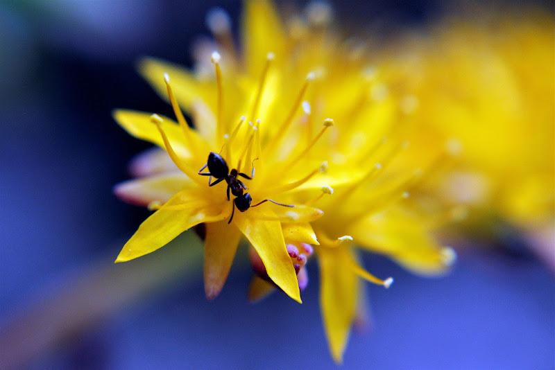 La formica di dino pas