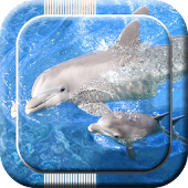 Dolphin Live Wallpapers