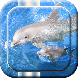 Dolphin Live Wallpapers download