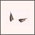 ハンターの耳