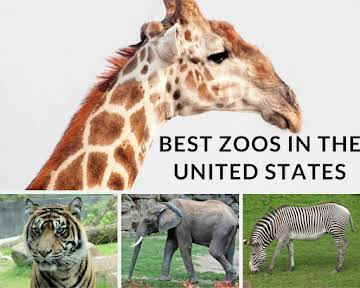 Best Zoos in the United States