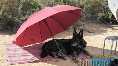 Photo: Zita föredrar att slappa under sitt parasoll för trots att det är 2013 och årets första dag så är det mycket varmt i solen