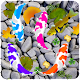 Download Water Fish Live Wallpaper For PC Windows and Mac