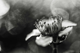 Photo: seeing more than the obvious is a conscious choice... do you just look, or do you choose to see ...  #bwphotography  #monochromeworld  +Monochrome World+Monochrome Arty Club +HQSP Monochrome+FloralFriday #floralfriday  #flowerphotography