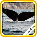 Jigsaw Puzzles: Whales icon