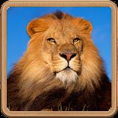 사자 왕국