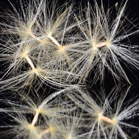 adenium seeds opn the mirror by LADOCKi Elvira - Nature Up Close Other plants ( nature, adenium, seeds, plants, garden )