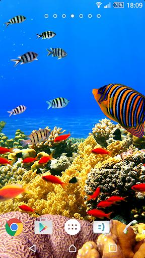 珊瑚礁壁纸4K