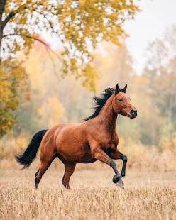 Appp.io - Kůň Zvuky - náhled