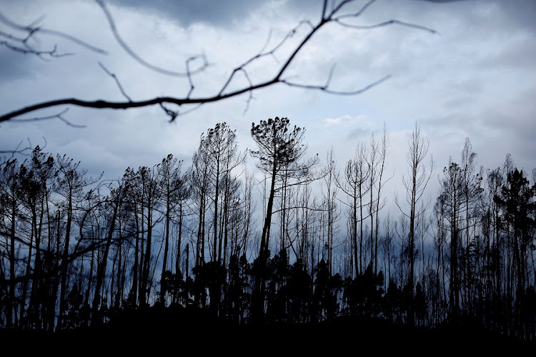 A part of a burnt forest is seen in Vila Nova, near Vouzela, Portugal. Picture: REUTERS/PEDRO NUNES