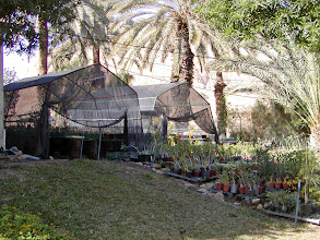 Photo: The garden of one of the residents