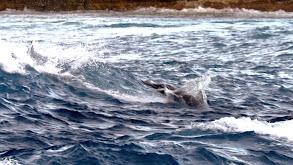 Shark Island thumbnail