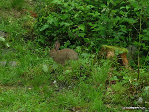 Photo: You might see this furry little bunny at Boulder Beach State Park