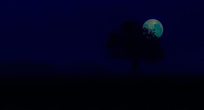 Io amo la notte perché di notte tutti i colori sono uguali e io sono uguale agli altri… (Bob Marley)  di Saltini Rino