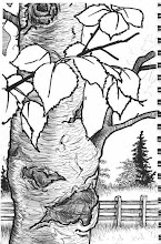 Photo: Birch tree at Georgeson Botannical Garden (pen & ink sketch)