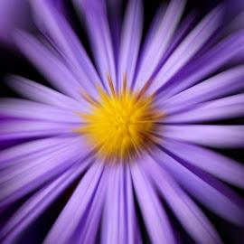 Digital procedural flower by Did Art - Digital Art Abstract ( digital, yellow, black, purple, abstract, flower )