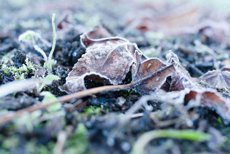 Foglia d'Inverno di ZampMatt88